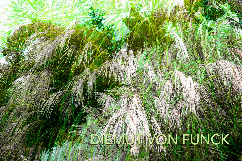 Indian Summer Wald buntes Laub